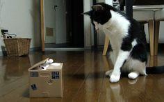 ARGENT : le chat à simplement une tirelire, dans laquelle il prend juste ce qu'il faut pour les courses du jour...
