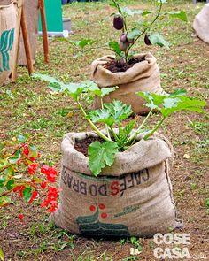 Risultati immagini per peperoni coltivazione vaso   orto terrazza ...