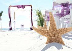 Brown sugar starfish lead the way