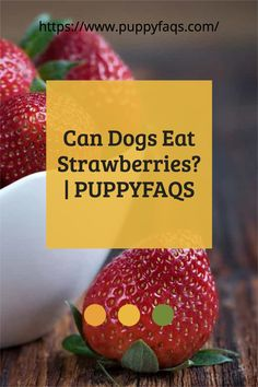 Dogs can't taste sweet flavors so they don't know the difference. But are there any risks from eating them? Find out in this article with a helpful infographic! #pet #dog #strawberries #infographic This is an exciting pin that asks if dogs can eat strawberries and then answers what might happen when they do. Can Dogs Eat Strawberries, Freezing Strawberries, Dehydrated Strawberries, Dried Strawberries, Fruits For Dogs, All Fruits, Strawberry Health Benefits, Healthy Body Weight, Dog Diet