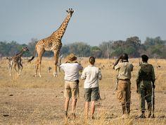 Nsefu   Signature African Safaris