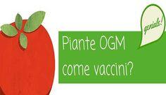Il Pomodoro OGM che Previene il Colera