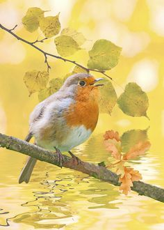 Robin digital wildlife art fine art photography by Iain S Byrne, £8.50