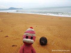 Lil' Squirt finds a coconut on the beach (Phuket, Thailand)