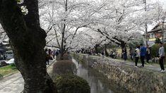 Philosopher's walk kyoto