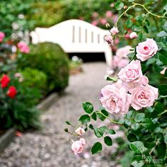 Fill your garden with sweet scents and beautiful blooms with these amazingly fragrant flowers.