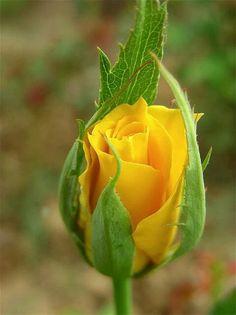 Fotó With love to you A szerelem hozzád