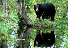 Reflecting on bear.............
