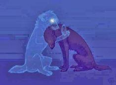 Os animais possuem alma, estão em caminhos de evolução.Chico Xavier nos deixou esta linda mensagem sobre nossos irmãos menores, os animais. Os cães como todos os seres viventes, possuem alma e segu…