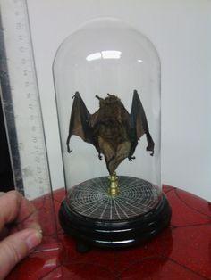 Mummified bat in dome