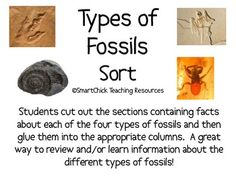 A sort activity using the four types of fossils (mold, cast, trace, and true form).  Students must cut out the boxes and then place them in the rig...