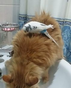Cat And Bird Are Best Friends