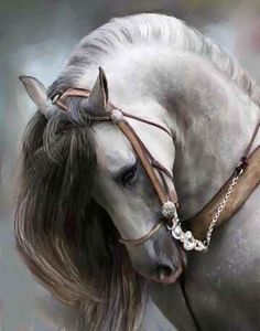 She is so beautiful, love horses.