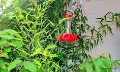"""Résultat de recherche d'images pour """"colibris images"""""""