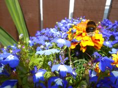 summer flowers and bee's