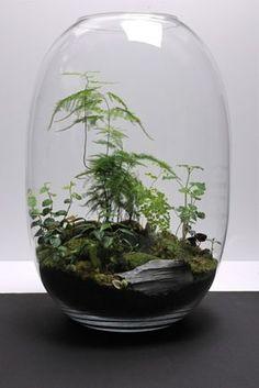 146 Best Terrariums Images Terrariums Miniature Gardens Succulents