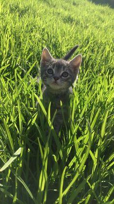 My friend took the cutest picture of her kitten http://ift.tt/2phixt7