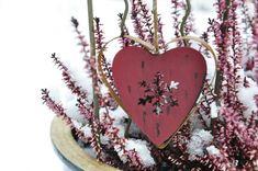 Winterharte Balkonpflanzen: Schneeheide als buntes Highlight   Garten-News   Garten