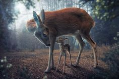 Photo Mother and fawn by John Wilhelm on 500px