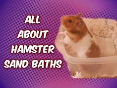 All About Hamster Sand Baths! - YouTube