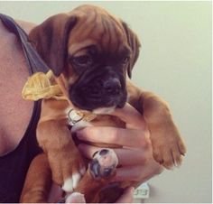 The perfect ring + a puppy = a proposal no one could turn down!