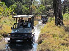 Safari trip, Okavango Delta, Botswana, Safari
