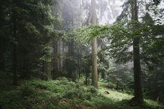 https://flic.kr/p/JSTW2J | Into the Woods |   Tumblr  |  500px  |  GettyImages    | Instagram