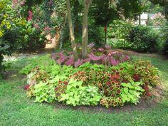 coleus for the shade garden