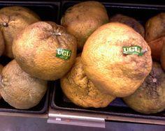【 アグリ(ugli) 】  原産国はジャマイカ。かんきつ系の果物でグレープフルー ツとタンジェリンの交配種。見た目が醜いため、英語の「ugly」(醜い)をとって名付けられたそうです。見た目とは裏腹 に非常にジューシーで甘いとのこと。