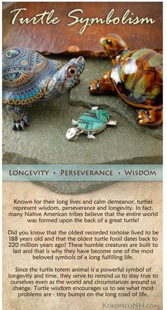 Native American Turtle Symbolism - Animal Symbolism - Knowledge Base - Kokopelli of NH Turtle Symbolism, Animal Symbolism, Animal Meanings, Turtle Quotes, Animal Spirit Guides, Turtle Spirit Animal, Turtle Time, Reptiles, Tortoise Turtle