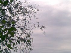 Nyár és fűz leveles szegély az éghez, szürke, fehér, fekete
