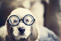 Top 11 Smartest Dog Breeds