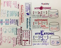 We Teach High School: Cell Transport Tonicity Doodle Notes Biology Lessons, Ap Biology, Teaching Biology, Science Biology, Science Lessons, Life Science, Earth Science, Science Experiments, Science Notes