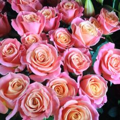 Beautiful Miss Piggy Roses. A must have in the living coral colour palette. Coral Colour Palette, Coral Color, Miss Piggy, Live Coral, David Austin, Types Of Flowers, Beach Holiday, Color Of The Year, Pantone Color