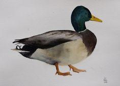Watercolor duck