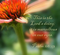 Psalm 118:23 More at http://ibibleverses.christianpost.com
