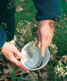 Collecting and storing seeds from what you already have!
