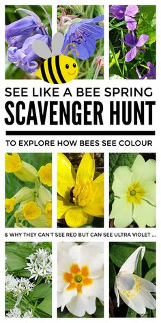 Learn to see like a bee with this lovely spring flower scavenger hunt for kids which makes a great outdoor & forest school plant science activity. By finding different early spring flowers on this nature hunt children from preschool & kindergarten through to middle school can learn how bees see colour - they don't see red but can see ultra violet - and through this learn about the colour spectrum and light waves. #plantscienceactivity #forestschool #springscavengerhunt #plantscienceexper