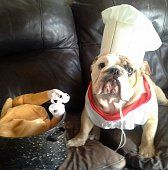 """Fromm Family Foods """"Thankful Thanksgiving"""" Bulldog Photo Contest"""