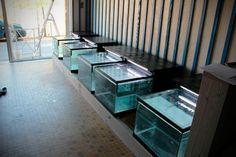 Fish Pedicure, Aquarium, Spa, Garra, France, Furniture, Home Decor, Goldfish Bowl, Decoration Home