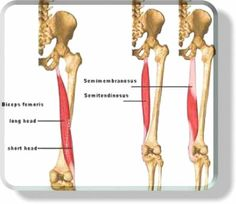 hamstrings - Google Search