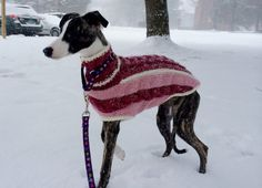 Free Knitting Pattern For Greyhound Jumper : 1000+ images about Greyhound & Whippet sweaters on Pinterest Whippets, ...
