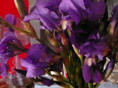 regalo del giorno trovate nelle vigne ... ecco perchè i nostri vini sono cosi floreali :-)