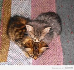 Funny pictures about A heart made of kittens. Oh, and cool pics about A heart made of kittens. Also, A heart made of kittens photos. Cute Cats And Kittens, Kittens Cutest, Kitty Cats, Kittens Playing, Cat Cat, Baby Kitty, Funny Kitties, Cats Bus, Ragdoll Kittens