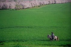""" Al-Ramla Plains - Palestine"