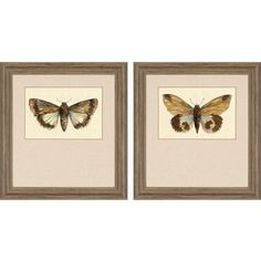 Grace your walls with the nature-inspired Paragon Decor Beautiful Wings Framed Wall Art - Set of The two butterfly prints feature rich colors and realistic details. Fabric matting accents the artwork. The barnwood frames enhance the natural beauty. Painting Frames, Painting Prints, Wall Art Prints, Framed Prints, Dragonfly Wall Art, Butterfly Wall Art, Frames On Wall, Framed Wall Art, Wall Art Pictures