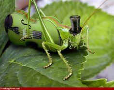 Violin-Cricket-30188.jpg (949×751)