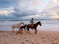 Horses along the beach at sunset on #PlayaCarmen in Santa Teresa, Costa Rica. For more #CostaRican adventures visit #thetravelcontentpros @ www.mp-a-go-go.com