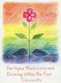Waldorf ~ 5th grade ~ Botany ~ Elements & Seasons ~ main lesson book