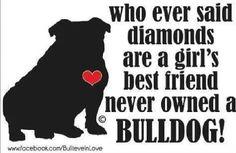 Who ever said diamonds are a girl's best friend never owned a bulldog! Boxer Bulldog, Bulldog Puppies, Bulldog Quotes, Wallpaper English, Bulldogs Ingles, Olde English Bulldogge, Bully Dog, British Bulldog, Puppy Clothes